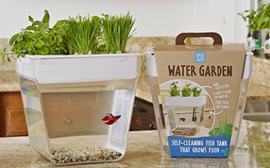Amazon.com Back to the Roots Water Garden Live Indoor House Plants Pet Supplies